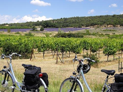 Provence Cycling Holidays Freewheeling France