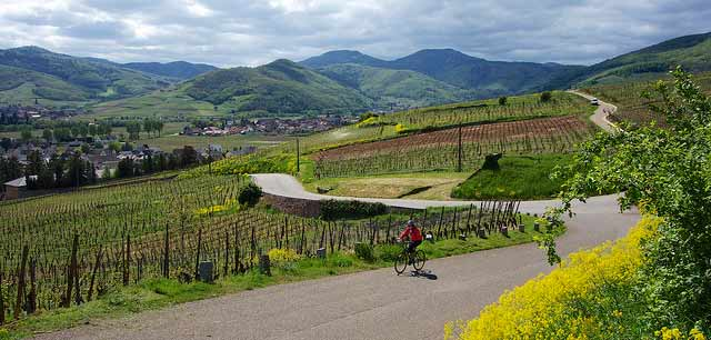 Cycling the Alsace Wine Trail