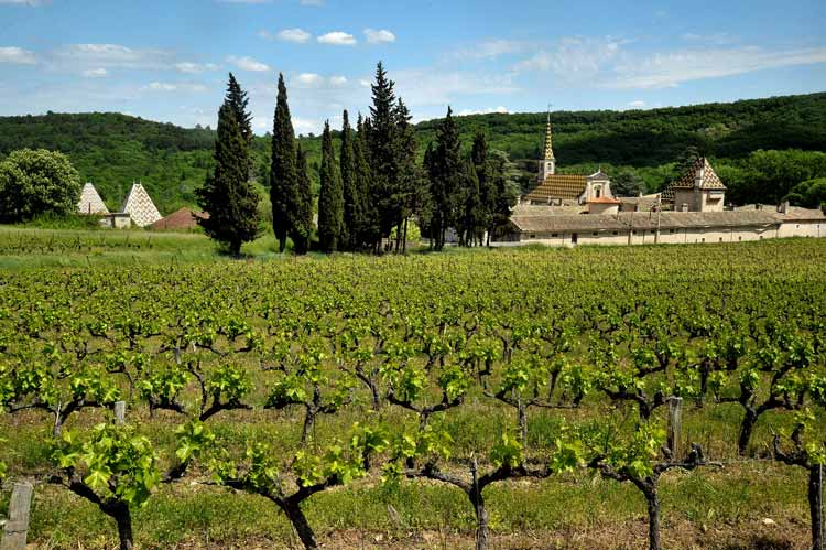 The vines in the Gard area of Provence, just to the west of Provence. Photo: Gard Tourism