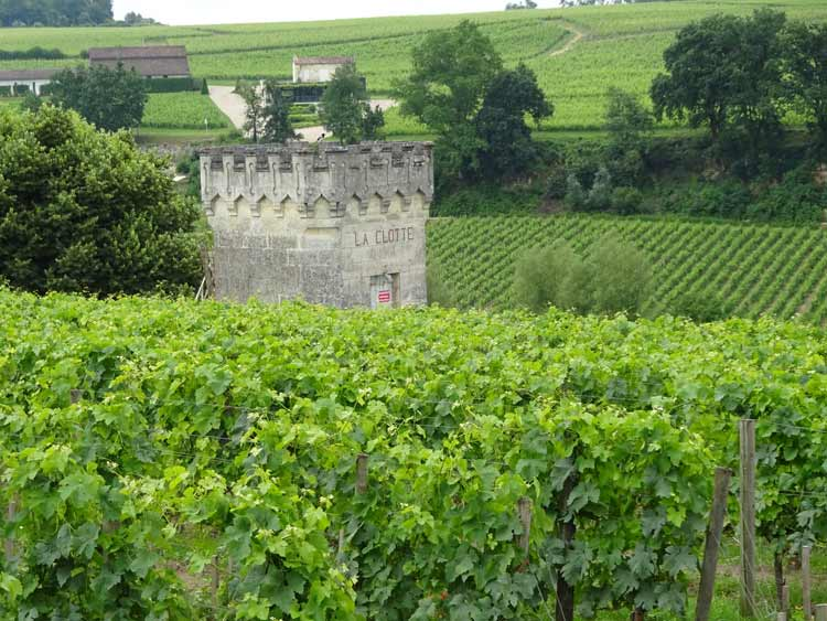 Saint-Emilion bike ride