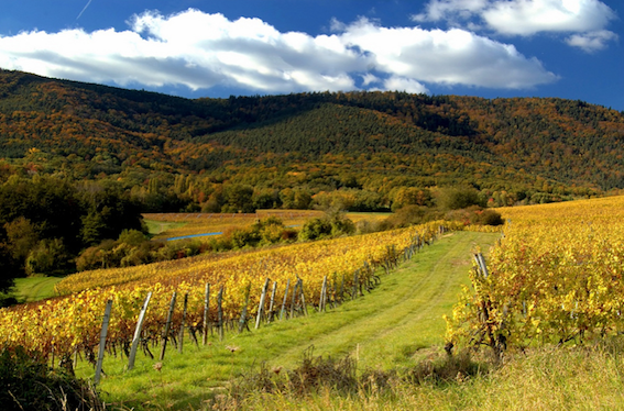 Valleys and vines of the Vosges by Helmut